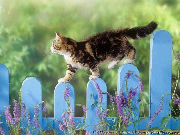 Awesome Shot of Cat On Fence