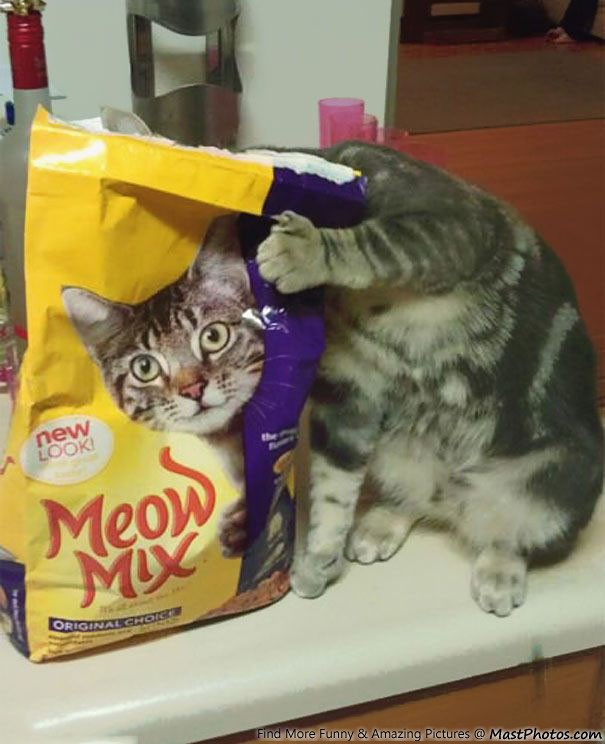 Perfect Click Of Meow Mix