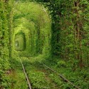 Train Track Tunnel Made Purely Out Of Trees