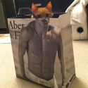 Cat Perfect Click in Bag
