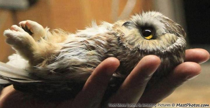 Image of: Whet Owl Mastphotos Cute Baby Owl In Hand