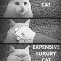 How To Make A Normal Cat To A Luxury Cat