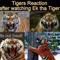 Tiger Reaction After Watching Ek Tha Tiger