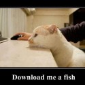 Download Me A Fish Please