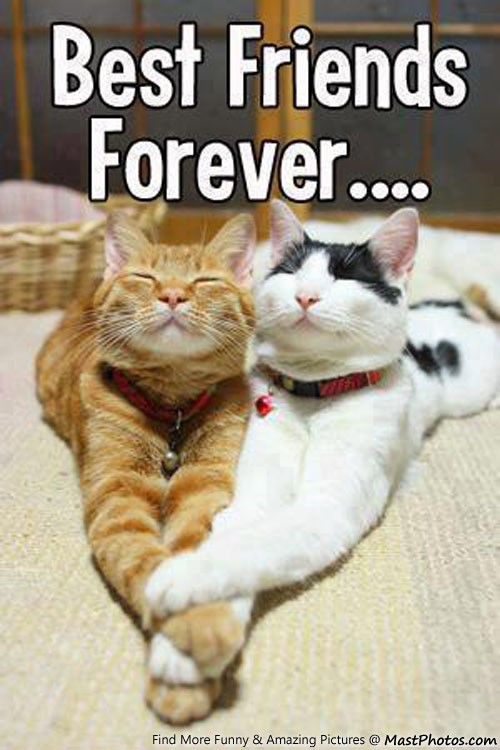 Best Friends Forever Cat Food