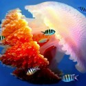 Beautiful Jelly Fish