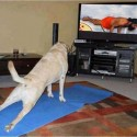 Dog Is Doing Yoga