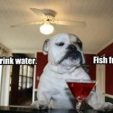 This Dog Don't Drink Water But Why?