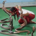 Kissing The Snakes – Only In India