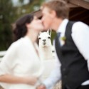 Photobomb Level &#8211; Llamagraphy