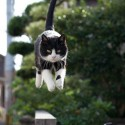 Perfect Time Photo Of A Jumping Cat