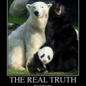 The Real Truth About Pandas