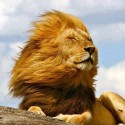 Enjoying The Wind – A Royal Click
