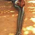 Bravery Redefined – Small Boy Sitting On a Big Snake