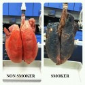 Say No To Smoking &#8211; The Difference Is Clear