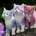 Beautiful And Colorful Kittens