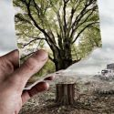 Save Trees – Picture Worth Million