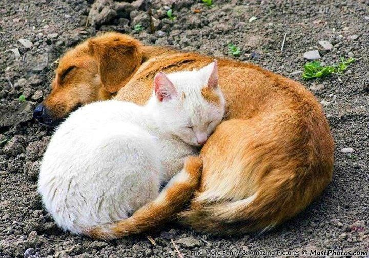 Image result for dogs and cats sleeping together photo