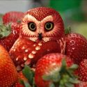 Not A Real Owl, It Is Food Art