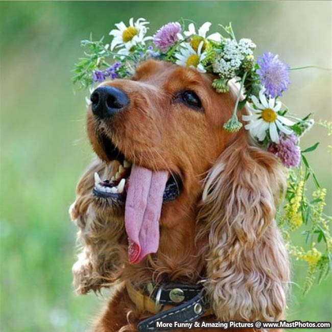 Dog With A Flower Crown On Head Looking Beautiful.